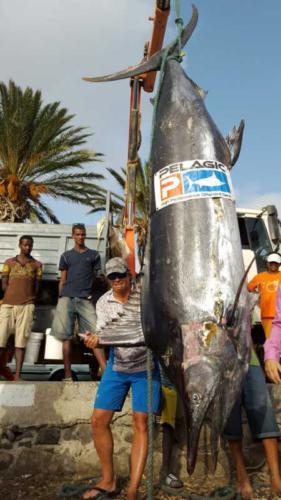 380 kg. Рыбалка на Кабо-Верде