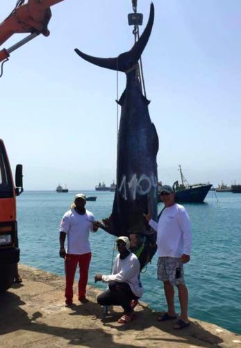 500 kg. Рыбалка на Кабо-Верде