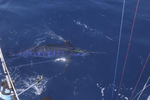 Рыбалка на Кабо-Верде