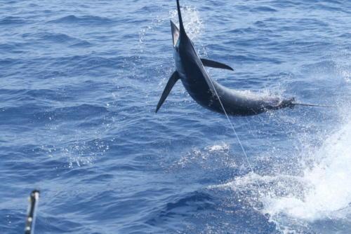 Рыбалка на Кабо-Верде 2016