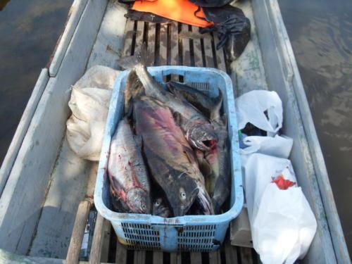 Рыбалка на Дальнем Востоке сентябрь 2017