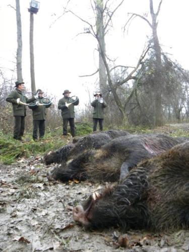 Охота на кабана в Хорватии 2017