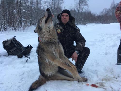 Охота на волка 01.2017
