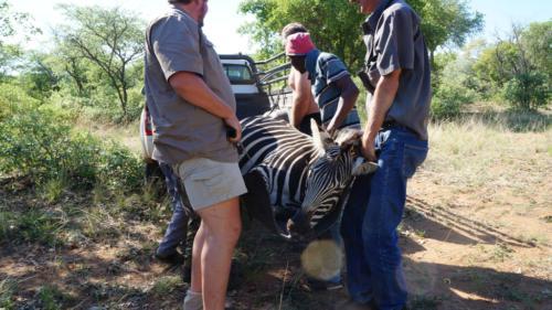 Охота в ЮАР 2018