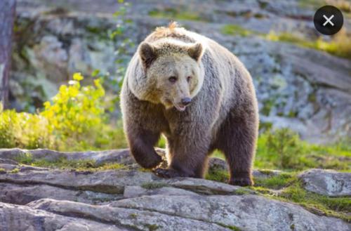 Охота на медведя на базе 1300 км Карелия 05.2019
