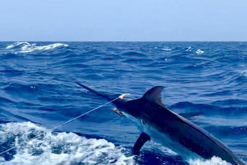 Рыбалка на Кабо-Верде 07.2019