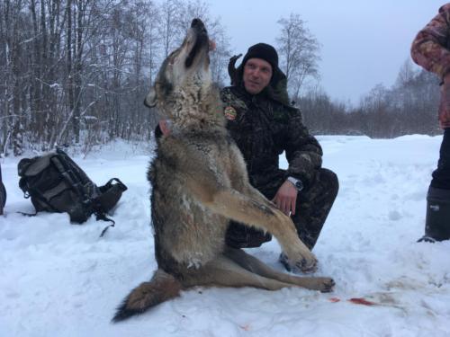 Охота в тверской области январь 2019