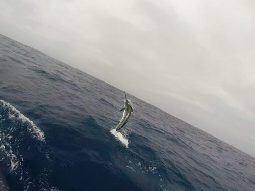 Рыбалка на кабо-верде 2015